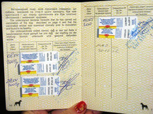 Список документів, щеплень, довідок