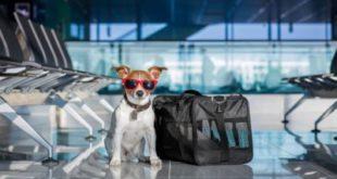 Документы для вывоза собак и кошек за границу