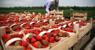 Сезонная работа в Польше - нюансы которые нужно знать