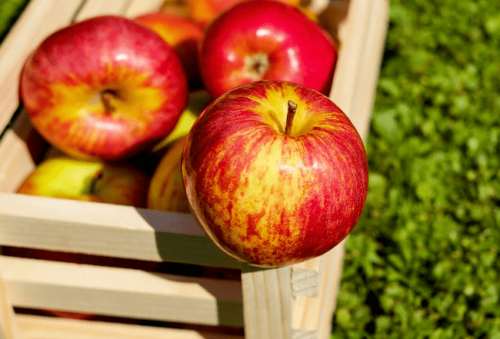 Сезонна робота в Польщі яблука