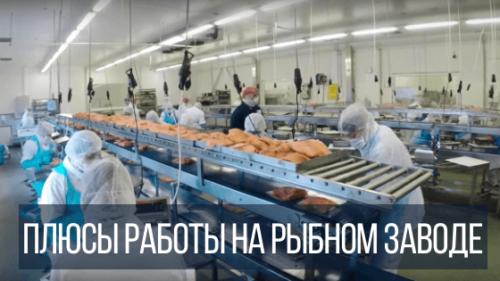 Плюсы работы в Польше на рыбном заводе